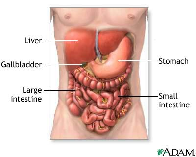 Read important facts about your digestive system so you can implement exciting ideas on how to maximize it and lose belly fat in the process.