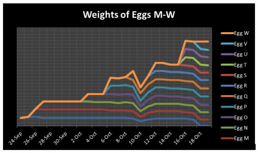 Not sure why Egg W is liked to all the other lines, making it look like its been in there since the first day when in fact its been the last egg incubated. SIGH. The life of a chart-maker must be fun.