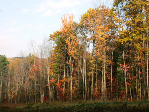 The sunlight this morning is highlighting this stand of trees in all their different colorations.