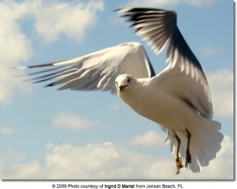 Jonathan Bending His Wings in Flight to Make a Perfect Curve