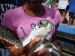 My daughter holding one of the hatchlings.