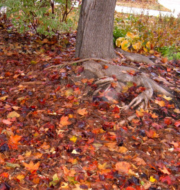 The forest floor is strewn with color.