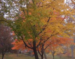 Green, yellow & orange dance in the fall breeze.