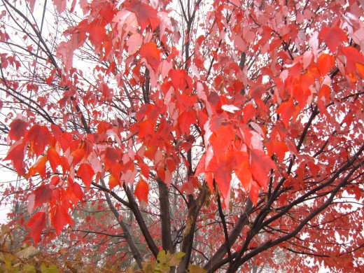 Reds blaze across the landscape in Autumn