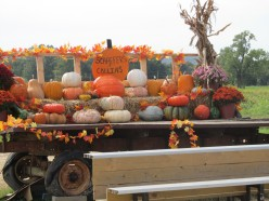 Pumpkin Patch, Road Trip to the Farm, Mayflower, Arkansas, Frugal Vacation