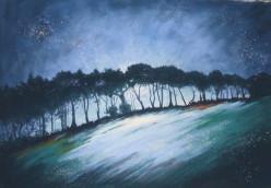 Line of Trees, Postbridge, Devon