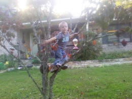 My grandson Maddox climbing the Dogwood in our front yard.