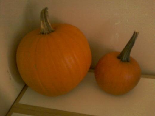 A large halloween Carving Pumpkin next to the smaller sugar pumpkin.