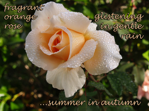 Modern Haiga (Haiku with Photographic Image): Summer in Autumn
