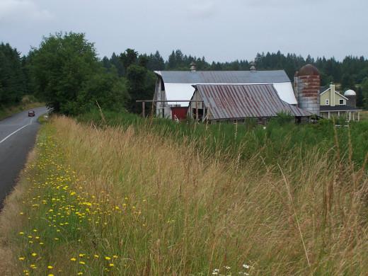 CSA farm near Olympia