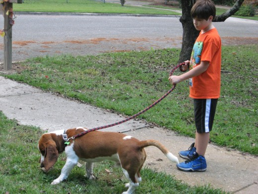 Walking on leash is usually a great option.