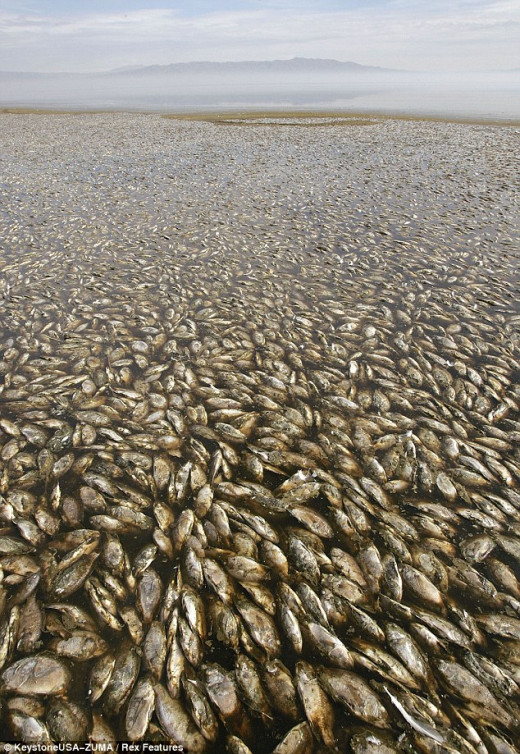 Massive fish kills from methane gas, lack of oxygen and warming temperatures.