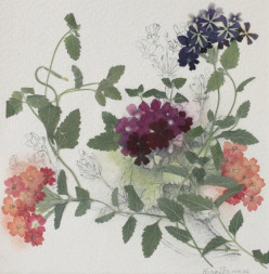 Preserve Flowers by Pressing or Drying Them