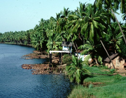 The enchanting Kerala