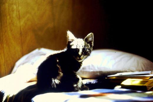 Bed Cat 1973