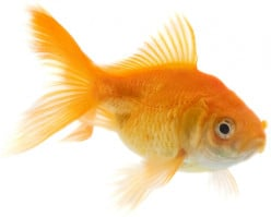 Understanding the Correct Diet for Your Aquarium Fish