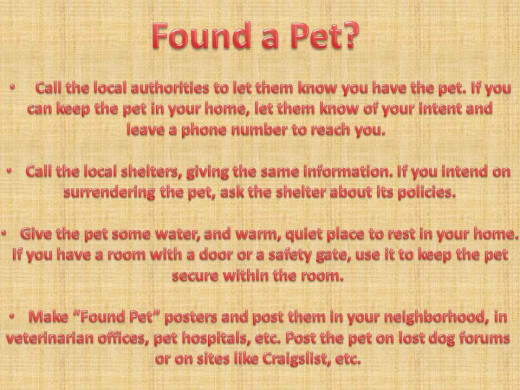 What to do if you find a lost dog, cat, or pet