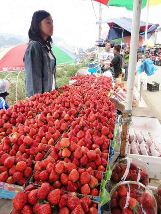 Tons of strawberries!