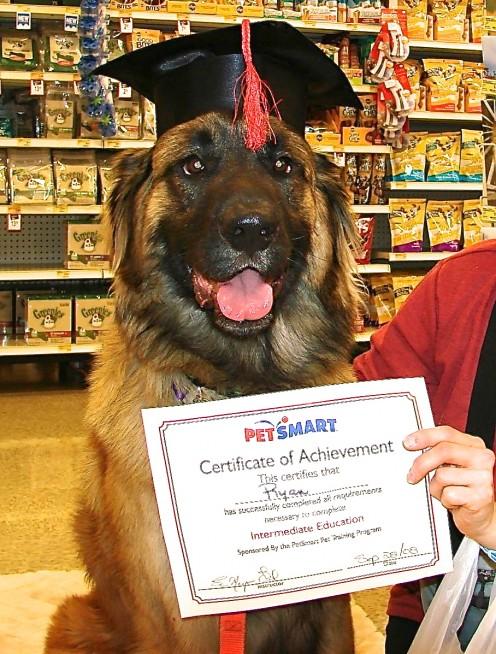 Ryan graduating from the intermediate level training program at PetSmart