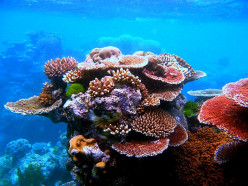 Australian Scuba and Snorkeling Dive Cruises, Tours, Holidays, Schools, Live-Aboard Charters