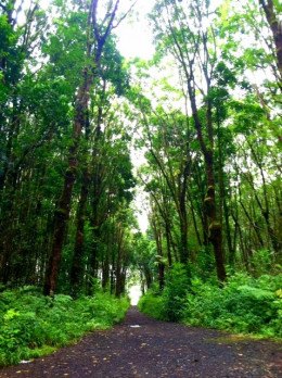 Here's the road to my shooting grounds; safe, clear, and totally serene! (^-^)
