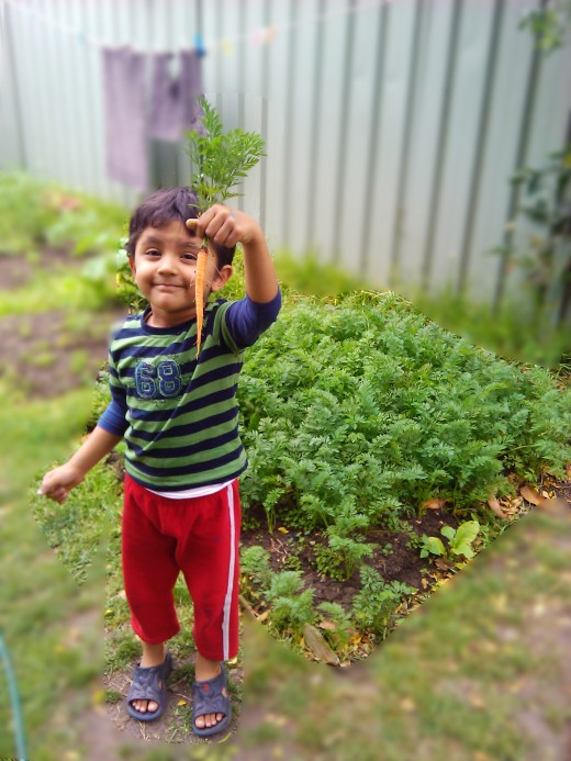 Our little boy just plucked the carrot from the garden and is so proud of it.