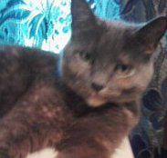 Bessie, my cat