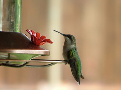The Magical Hummingbird