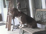 Wacker hanging out on the porch