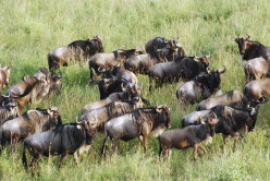 Tourism in Kenya, a World Famous Tourist Attraction