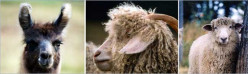 The Southeastern Animal Fiber Fair (SAFF) -  a Paradise for Knitters and Crocheters