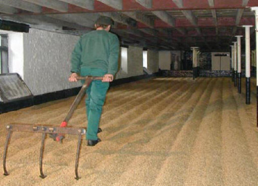 Drying malted barley on a 'floor'