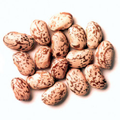 Pinto Beans a Musical Fruit