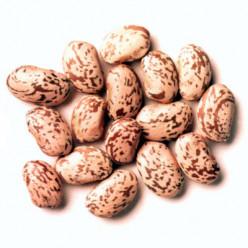 Pinto Beans a Musical Fruit