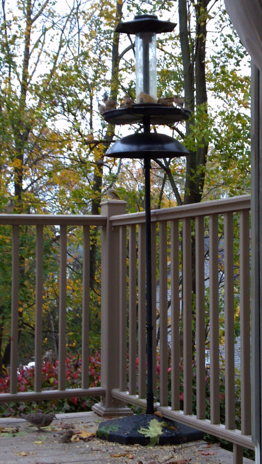 "THIS FEEDER EVEN ALLOWS ""GROUND FEEDERS"" SUCH AS CARDINALS AND MOURNING DOVES TO FEED."