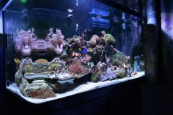 Understanding Aquarium Water