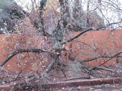 Fallen trees throughout our area outside of Philadelphia, Pa,
