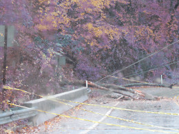 A local bridge that was closed after a tree had fallen from the storm.