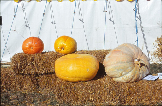 Pumpkin class