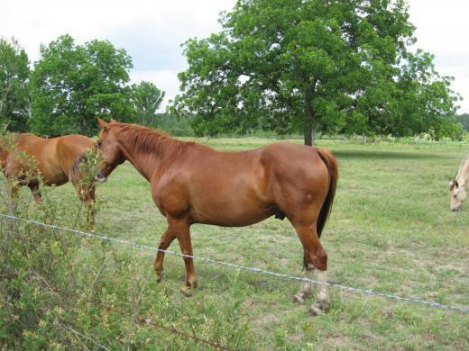 Proper and regular Horse Care is necessary for optimum Horse Health.