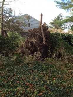 A Fallen Tree - Who is Liable, You or Your Neighbor?