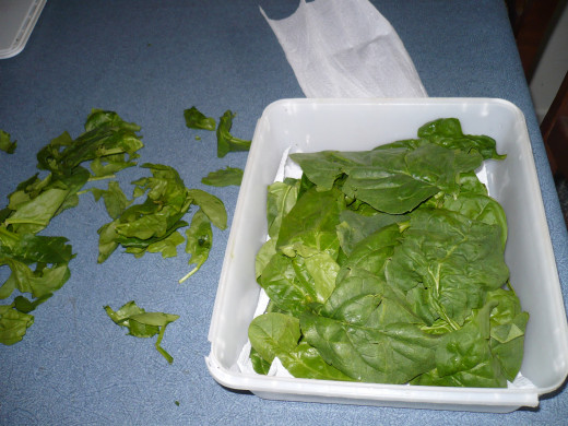 Storing spinach in a sealed container with paper towels between the layers, will keep it for up to 2 weeks.