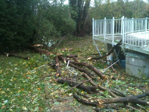The tree that fell on my pool.