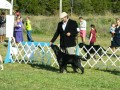 AKC Dog Shows - Into The Fray - The Results