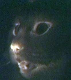 Glow in the Dark Pets