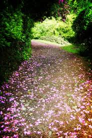 Our path through life.