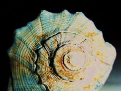 15 Ways to Use Shells