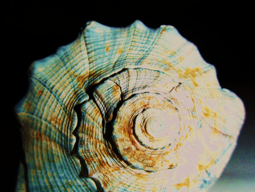Shells come in a wide array of shapes, sizes, and colors for just about any craft, art, or display design.
