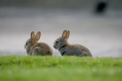 How To Choose Your Rabbit | Your First Rabbit | Rabbit's Guide