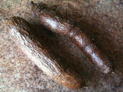 Yuca Root (uncooked)